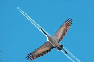 Стая птиц «атаковала» самолет, летевший в Бишкек из Екатеринбурга