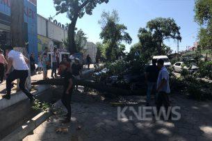 В Бишкеке на автомобиль упало дерево (фото, видео)