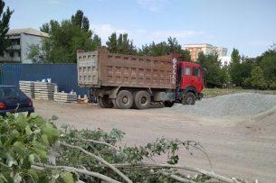 В Бишкеке предлагают объявить мораторий на вырубку здоровых деревьев