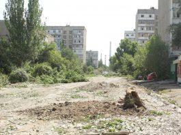 Мэрия Бишкека начнет высадку деревьев в сентябре