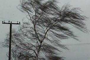 Сильный ветер обесточил целое село в Джалал-Абадской области