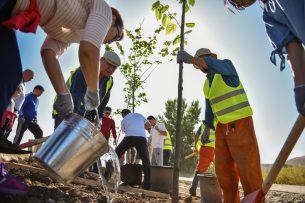 Мэрия Бишкека совместно с горожанами посадили 80 деревьев вдоль Южной магистрали