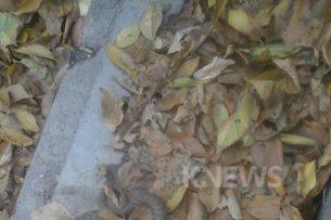 Очевидец: В одном из парков Бишкека неподалеку от больницы водится змея