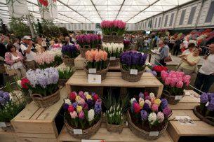 В Бишкеке пройдет выставка-ярмарка цветов и растений «Яркие краски октября»