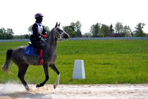 В Бишкеке прошли первые международные соревнования по дистанционным конным пробегам