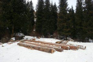 Правительство Кыргызстана поручило провести расследование и остановить вырубку деревьев в ущелье Джууку