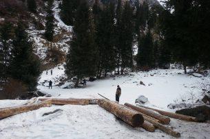 Никакой массовой вырубки леса: УВД Иссык-Куля опровергает факт уничтожения деревьев в ущелье Джууку