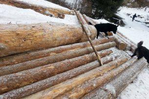 В ущелье Джууку ведется массовая вырубка леса: активисты бьют тревогу