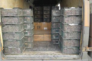 Контрабанду сигарет с акцизами Таджикистана пытались ввезти в Кыргызстан