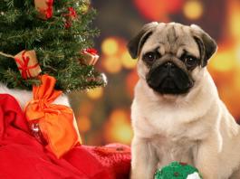 В каком наряде встречать год Земляной Собаки?