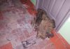 При пожаре в столичном микрорайоне «Асанбай» погибла пенсионерка (фото)