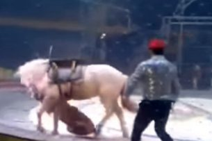 Тигр и лев напали на цирковую лошадь в Китае (видео)