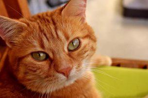 В Италии женщина завещала €30 тыс. своему коту