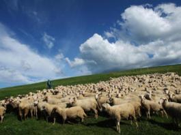 В Кыргызстане из-за перевыпаса скота наблюдается деградация пастбищ