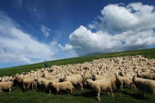 В 2017 году за использование пастбищ в Кыргызстане собрано 127 млн сомов