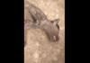 Очевидец: На Иссык-Куле обнаружили неизвестное существо (видео)
