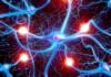 Ученые смогли передать в мозг запах, которого нет