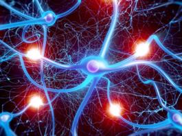 Нейронная скульптура: как мозг меняется в течение жизни и почему возраст — не помеха обучаемости