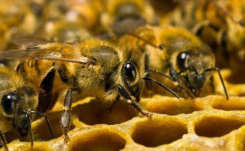 Количество видов диких пчел сократилось на 25% за последние 30 лет