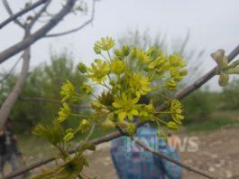 Бишкекзеленхоз: Мы на 99% уверены, что дорогие саженцы приживутся