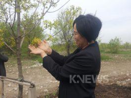 Еще 2 тыс. саженцев планируются посадить в этом году в Бишкеке