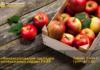 «Коммерческий банк КЫРГЫЗСТАН» начал выдачу кредитов в рамках программы РКФР «Финансирование закладки интенсивных садов»
