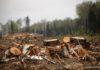 Госагентство охраны окружающей среды Кыргызстана вырубит еще 752 дерева