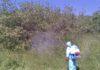 Лесные хозяйства Кыргызстана начали борьбу с непарным шелкопрядом