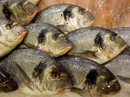 В мире растут объемы потребления рыбы