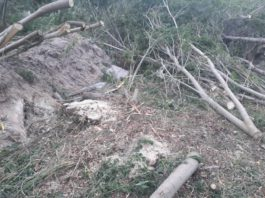 Госэкотехинспекция: На Иссык-Куле самовольно вырубают деревья
