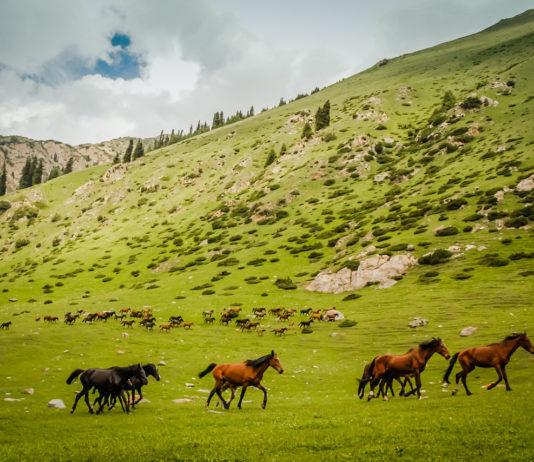 В урочище  Сусамыр пройдет V Республиканский слет животноводов Кыргызстана