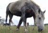 Депутату отказали в парковке для коня: Он решил обратиться в суд