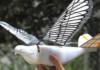 В Китае испытывают шпионские дроны, неотличимые от птиц