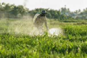 Международным скандалом грозит применение китайскими агрономами в Казахстане пестицидов