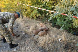 В Чуйской области нашли заржавевшие снаряды (фото)