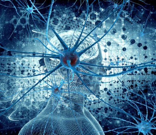 Роботов с ИИ научат размножаться и развиваться