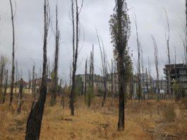 Деревья в парковой зоне специально травят? Бишкекчане просят мэрию и прокуратуру проверить это