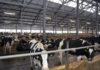 Абылгазиев посетил агропромышленный холдинг «Агрокомбинат «Дзержинский» в Минске