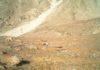 В Кыргызстане увеличивается популяция диких животных