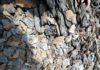 В природном парке «Кан-Ачуу» впервые установили фотоловушки