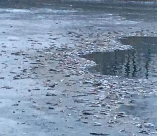 Массовая гибель рыбы в Атырау: вода признана безопасной для населения