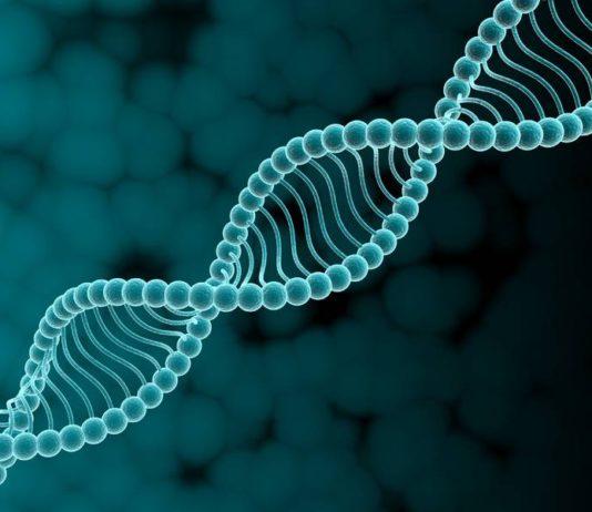 «Параноики искажают генетические базы данных»