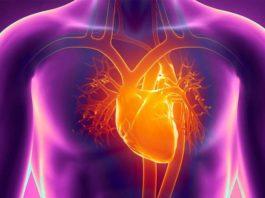 Исследователи научили сердце лечить само себя
