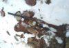 Жителя Чуйской области оштрафовали на 14,5 тыс. сомов за отстрел куропатки