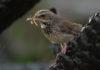 Просмотр телевизора помог птицам выбрать свежую еду