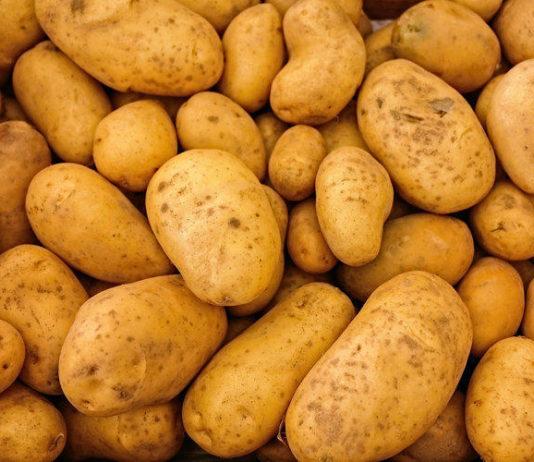 Ограничений на поставку кыргызского картофеля в Узбекистан нет. Отсутствует консенсус по закупочным ценам