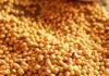 Минсельхоз: Кыргызстанским фермерам в этом году выгодно будет сеять чечевицу, гречиху и сою