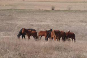 Табун лошадей хотели незаконно переправить из России в Кыргызстан