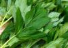Ученые обнаружили растение, способное замедлять старение