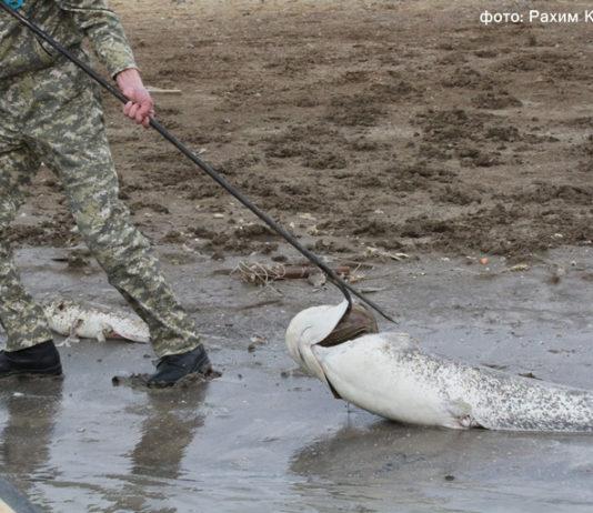 В Казахстане установили причину массовой гибели рыб: Они отравлены хлором